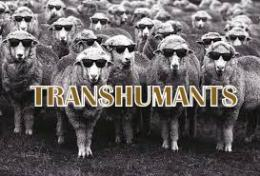 transhumants