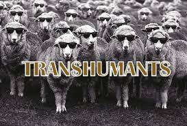 transhumants